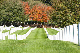 picture of headstones  - White Headstone rows at Arlington National Cemetery - JPG