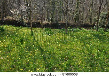 English Meadow