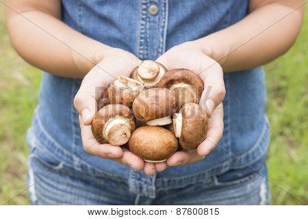 Champignon /button Mushroom