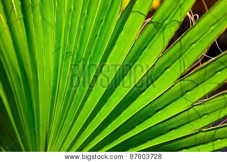 Palm close-up leaves texture with shadow