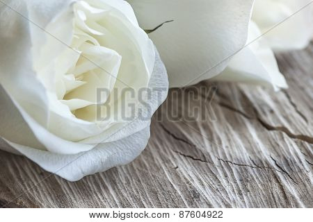 White Roses On Wood