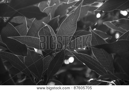 Close up of plant leaves. Black and white image with high contrast. A beautiful abstract nature background.