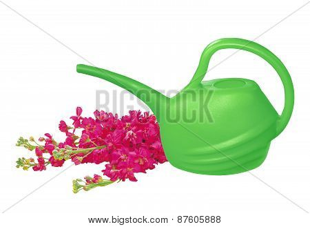 Green Watering Can With Red Flowers Isolated On White