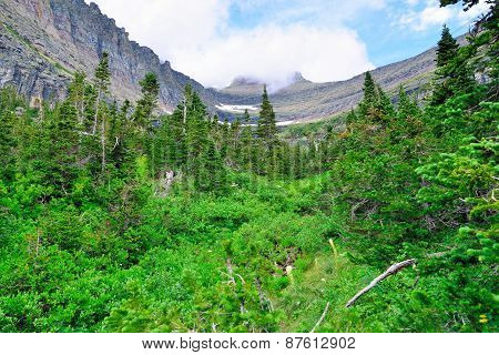 Mountains And High Alpine Conifer Forest In Glacier National Park