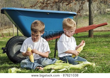 little boys shucking corn by wheelbarrow