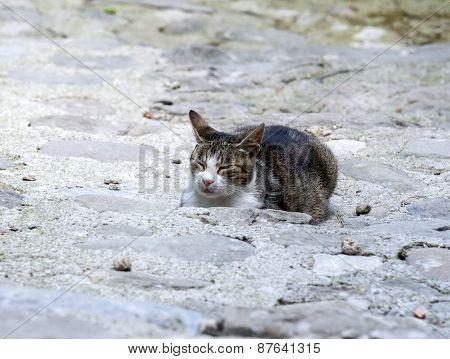 Cat Sleeping In Tuscany (italy)