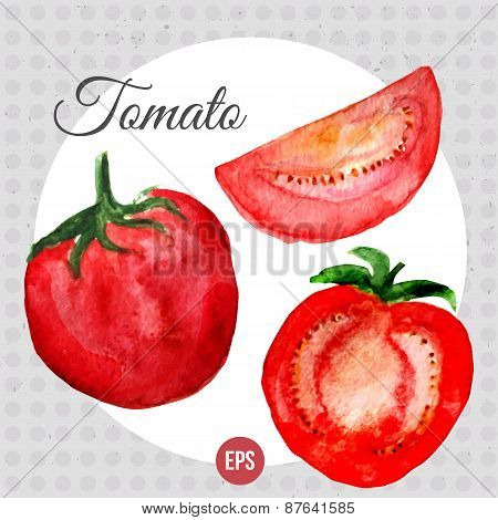 Vector watercolor with bright red tomato and sliced item. EPS10