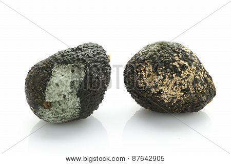 Rotten Avocados
