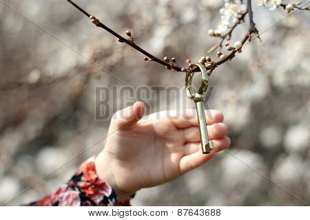 golden key on a blossom twig in childrens hand