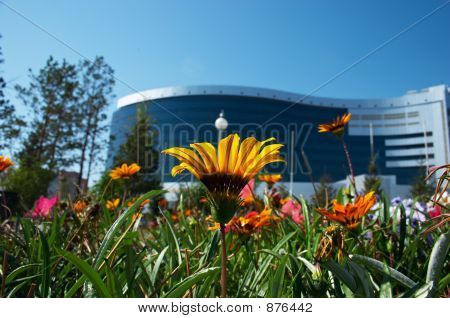 Flowers And Office Building