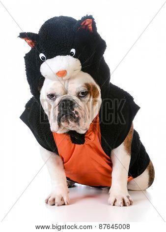 dog wearing cat costume on white background