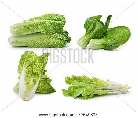 Fresh Chinese Cabbage ,lettuce , Bok Choy, On Awhite Background