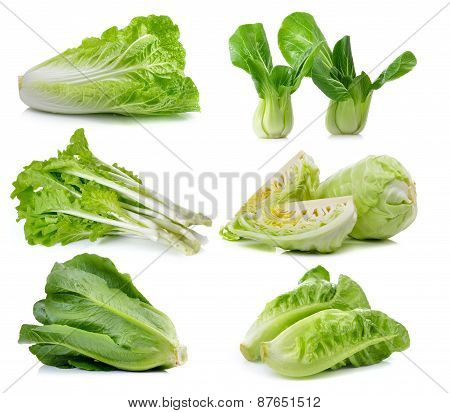 Fresh Chinese Cabbage ,bok Choy, Cos , Lettuce On White Background