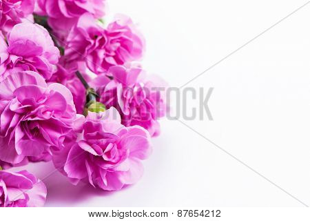Pink soft flowers bouquet on white background. Spring, celebration.