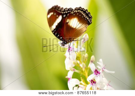 Gorgeous butterfly on flower, outdoor