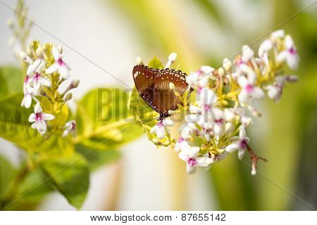 butterfly standing on flowers, nature background