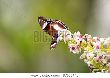 Cute butterfly standing on a branch full of flowers