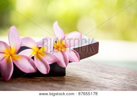 Pink Frangipani Plumeria flower, close up
