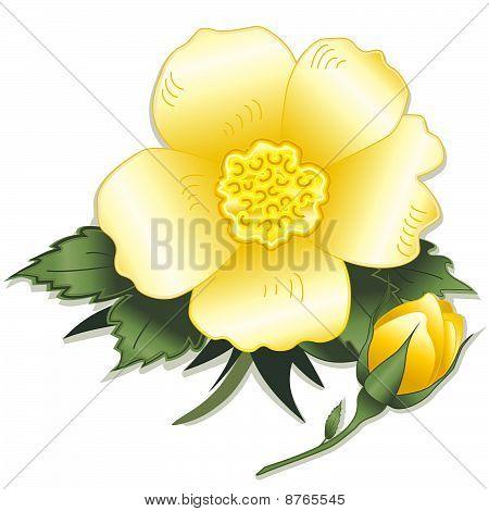 Wild Yellow Rose & Bud