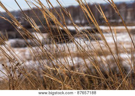 Dry Grass Field Snow Background