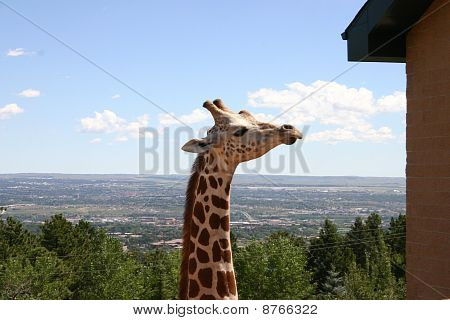 Giraffe profile over Colorado Springs
