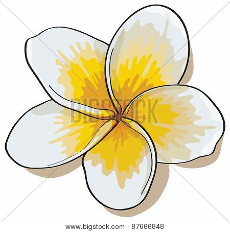 Tropical Flowers Plumeria Isolated On White Background.vectors