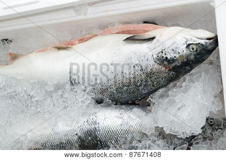 The method of storage of fresh fish in the ice chest