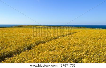 Wild Flower Meadow. Diagonal Path. Seascape And Blue Sky