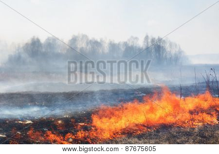 Forest Fire: The Burning Last Year's Dry Grass Against The Wood