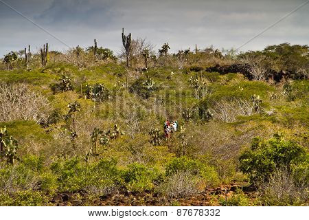 Unidentified tourists hiking along the palo santo forest in Santa Cruz island, Galapagos