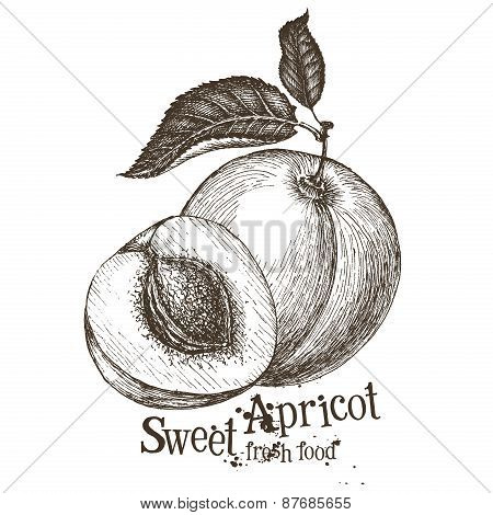 apricot vector logo design template. fruit or food icon.