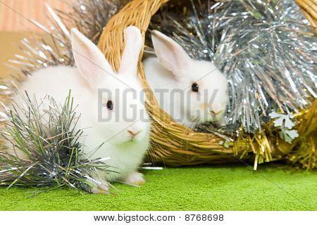 weiße Kaninchen im Korb