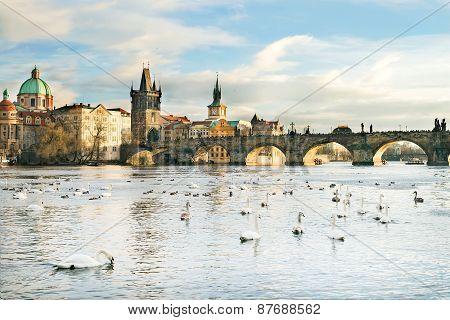 The Vltava River, Charle's Bridge And White Swans In Prague, Czech Republic