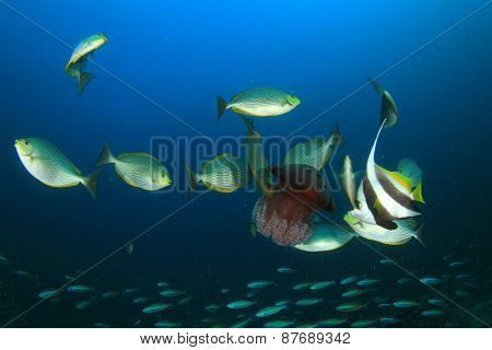 Fish feeding on jellyfish