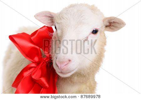 Sheep With Christmas Bow
