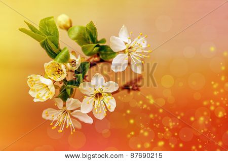Plum Flowers Greeting Card