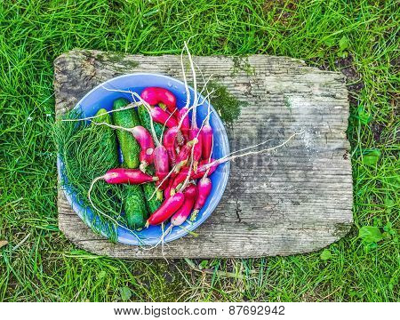 Fresh Garden Radish, Cucumbers And Dill In A Blue Ceramic Plate On A Rough Wooden Board Over The Gre