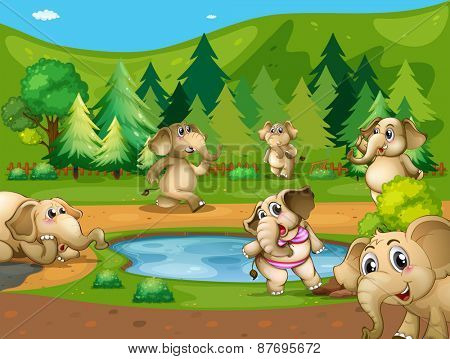 Elephants around the small pond