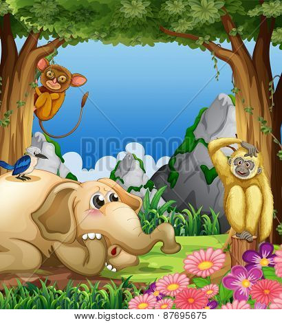 Many animals together in the forest