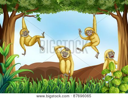 Gibbons hanging from trees in the forest