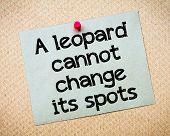 image of leopard  - A Leopard cannot change its spots Message - JPG