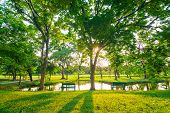 stock photo of swamps  - Beautiful green park tree and swamp Serenity scence - JPG