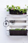 picture of pallet  - White storage industrial pallet used in gardening for a wall decoration as a shelf for flowerpots and other objects - JPG