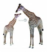 stock photo of low-necked  - two geometric giraffes - JPG