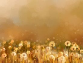 picture of fragile  - Vintage dandelion flowers in the meadows - JPG