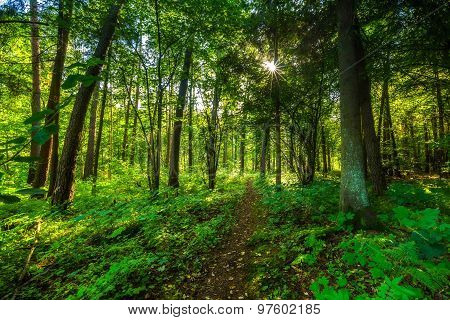 Beautiful Summer Wild Forest Landscape