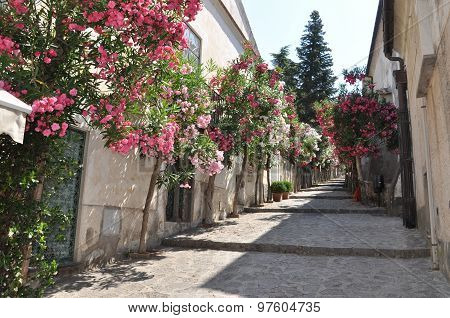 Narrow stone street with flowers in italian town
