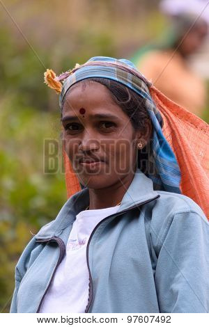 Portrait Of Tamil Woman While Working In Tea Plantation