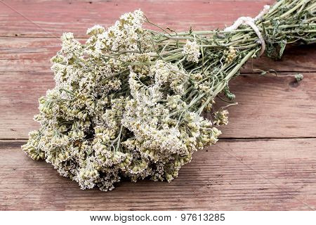 Medicinal Plants: Dried Flowers Medicinal Yarrow