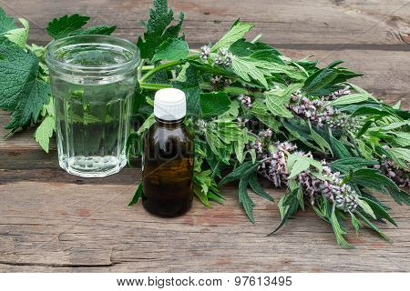 Medicinal Plant Motherwort And Tincture Of Motherwort